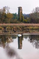 observationstorn i ett naturreservat med reflektion i en sjö foto