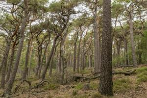 utsikt över en trädbevuxen dal med tallar och lövträd foto