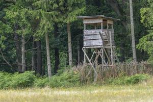 jägarens höga säte vid kanten av skogen framför en äng med grön bakgrund foto