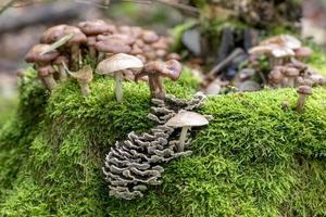 olika paddstolar växer på en gammal trädstam i mossan foto