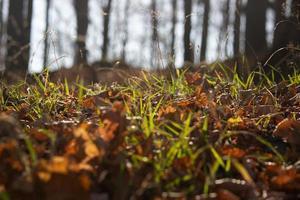 grönt gräs och bruna löv foto