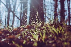 grönt gräs och solstrålar foto
