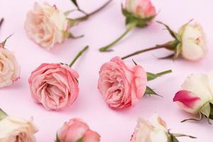 bakgrund eller mönster av många känsliga rosor i vitt och rosa foto