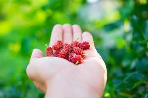 färsk mullbärsfrukt i handen foto