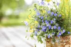 prästkragar vilda blommor cottagecore bukett blom foto