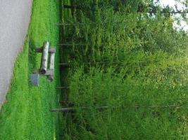 träbänk i en park med gröna lärkträd foto