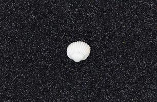 vita snäckskal på en trendig svart glitterbakgrund foto