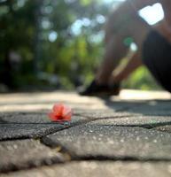 suddig av blomma på trottoaren i park och personen sitter bredvid den med bokeh textur abstrakt bakgrund foto