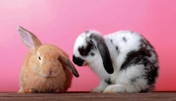 söta kaniner med rosa bakgrund, påskhelgkoncept foto