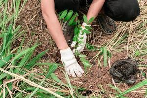 plantera träd i skogen foto