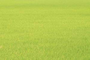 grönt fält sommarbakgrund foto