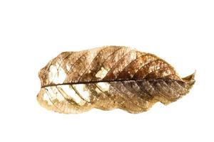 torr blad isolerad bakgrund foto