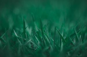 älskar miljön gräs topp bakgrund foto