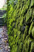 stenmur och grön mossa foto