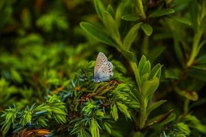 fjäril på gräset foto