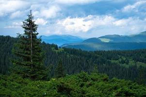 karpater berg panorama av gröna kullar i sommar berg foto