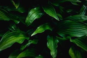bakgrund från gröna blad foto