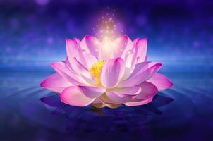 rosa lotus flytande foto