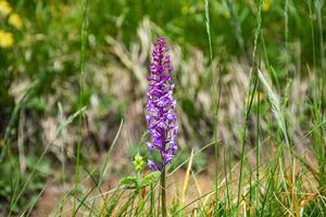 liten vild orkidé foto
