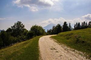 alpin stig mellan de gröna betesmarkerna i Posina-dalen foto