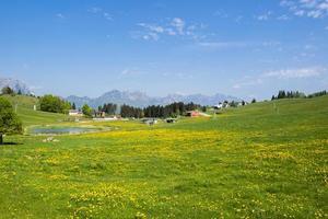 gula blommor och blå himmel foto