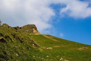 gröna ängar och gula maskrosblommor mellan alperna i recoaro mille foto