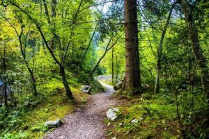 stig i skogen foto