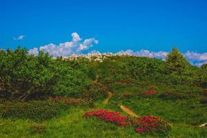 Cairn on Monte Baldo foto