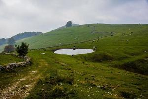 alpina betesmarker med kor foto