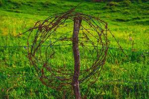 rostig taggtråd foto