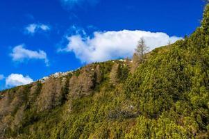 utsikt över tallarna och den blå himlen på Monte Portule foto