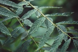 gröna trädblad på våren foto
