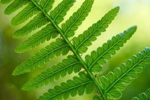 grönt ormbunkeblad under vårsäsongen foto