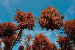 träd i berget under höstsäsongen foto