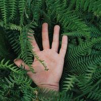 handen vidrör växterna foto