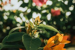 grönbladad växt foto