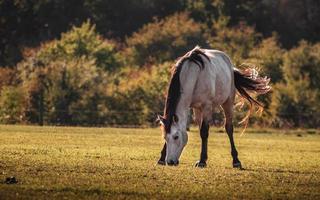 häst på ängen foto