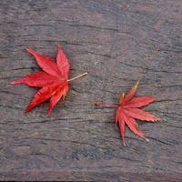 rött lönnlöv under höstsäsongen foto
