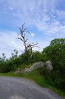 väg med gröna träd i berget foto