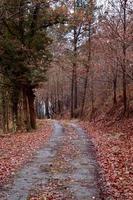 väg med bruna träd i berget under höstsäsongen foto