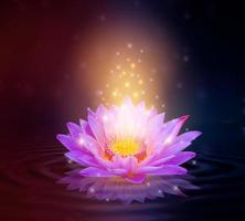 blommande rosa lotusblomma isolerad på gnistrad lila bakgrund foto