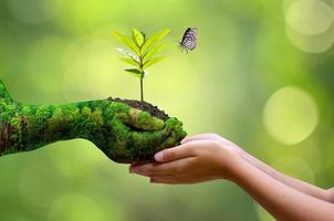 begreppet händer som odlar plantor på bokehgrön bakgrund foto