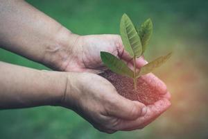 asiatisk kvinna som håller torvmossa organiskt material förbättrar marken för trädgårdsodling foto