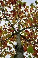 träd med bruna löv under höstsäsongen foto