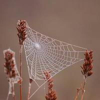 droppar på spindelnätet i naturen foto