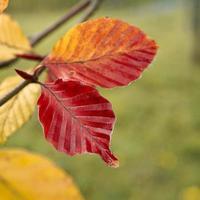 brunt blad under höstsäsongen foto