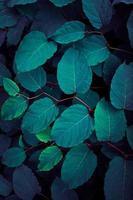 blå och grön växt lämnar blå bakgrund foto