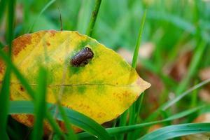 gult blad i naturen under höstsäsongen foto