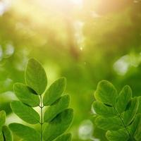 gröna träd lämnar på vårsäsongen grön bakgrund foto