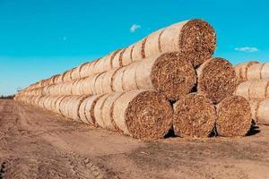 stora halmhögar rullade i balar på ett skördat fält mot en blå himmel foto